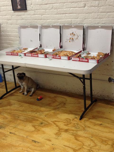 The Pug Meet Up. I'm a Loner Dottie. (6/6)