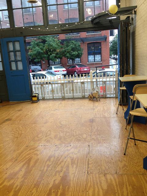 The Pug Meet Up. I'm a Loner Dottie. (2/6)