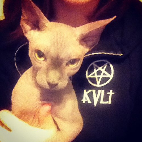 Boris and my KVLT hoodie. They regrammed it on Instagram and Twitter!