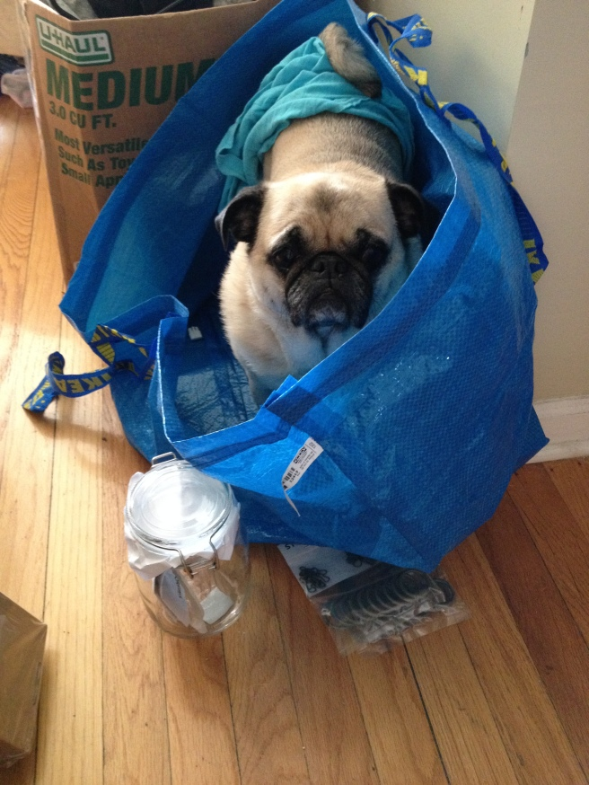 This day laborer was terrible though.  I'll never go to The PUG DEPOT again!