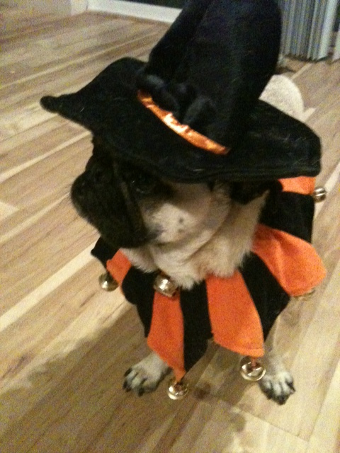 Leopold has to become WITCHZARD PUG to summon the METAL PUMPKIN spirits.