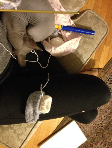 Knitting at home is awkward too with a small kitten.