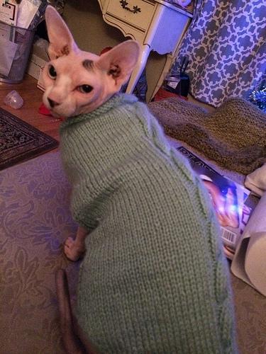 Despite his grumpy demeanor he's warm.
