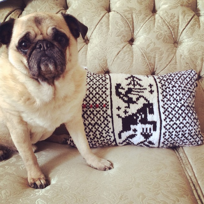 finished pillow. pug mildly impressed.
