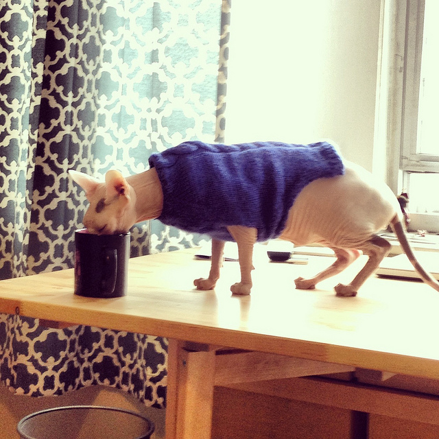 Although short, he prefers this sweater because he can run around.