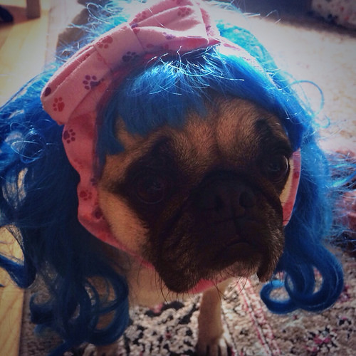 katy puggy!